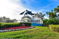 Virgin Holidays scraps ticket sales for SeaWorld, Atlantis The Palm in Dubai and other attractions that offer 'close encounters with captive whales and dolphins'