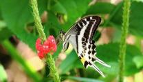 5 Biggest Species of Butterfly To Spot In India