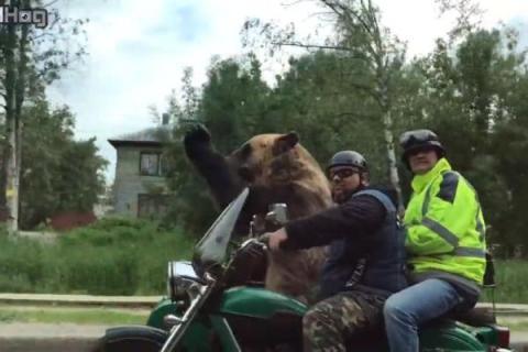 Edan, Pria Ini Ajak Beruang Naik Motor Bikin Jalanan Heboh