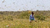 East Africa locust outbreak sparks calls for international help