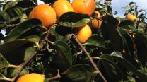 Produce report May 6