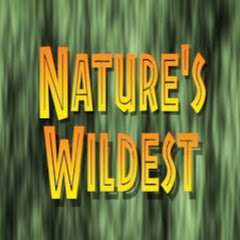 Nature's Wildest