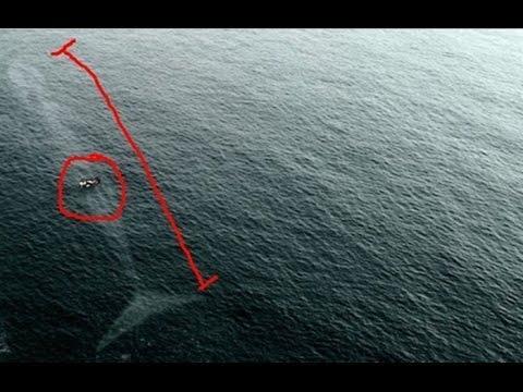 Benarkah Ikan yang Menelan Nabi Yunus Masih Hidup Hingga Saat Ini ?