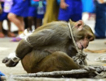 These pictures will show you the pain of innocent animals, See Pics