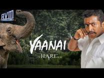 Breaking : Surya - Hari film titled Yaanai ? | Clarifications