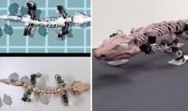 Jurassic World? Scientists 'resurrect' giant prehistoric LIZARD as walking ROBOT – VIDEO