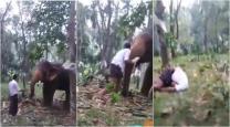 VIDEO: Drunk Kerala man tries to kiss elephant, regrets it immediately